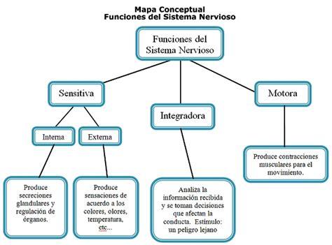 ¿Cuál es la función del sistema nervioso? - Sistema nervioso
