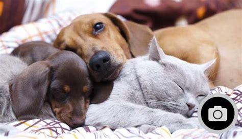 ¿Cuáles son las mascotas más comunes? - La Nueva España ...