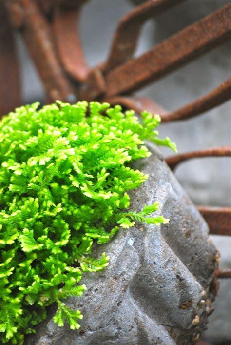¿Cuáles son las plantas de interior que necesitan poca luz ...