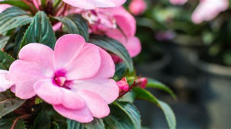 ¿Cuáles son las plantas más bonitas de los meses de verano?