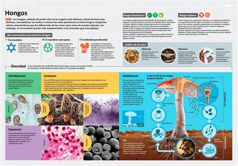 ¿Cuáles son las principales características de los hongos ...