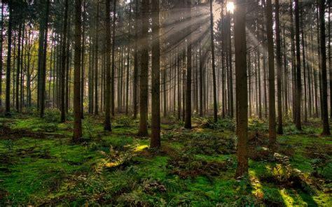 Cuáles son los beneficios ambientales de los bosques ...