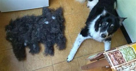 Cuánta Fauna > Y así es cómo se reproducen los perros: por ...