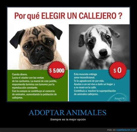¡Cuánta razón! / ADOPTAR ANIMALES
