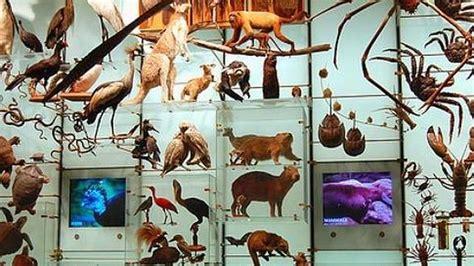 ¿Cuántas especies hay en la Tierra? - ABC.es