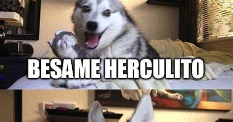 Cuánto cabrón / ¿Qué le dijo Hércules a su hijo?