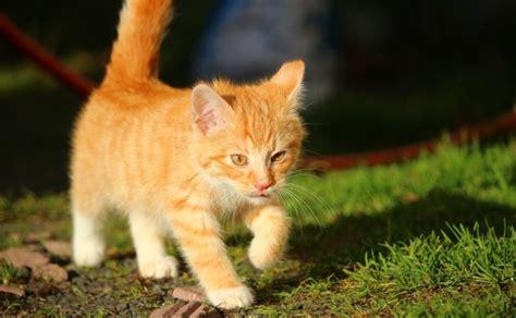 Cuántos años vive un gato | Curioteca Animal