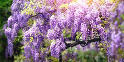 Cuatro preciosas plantas trepadoras con flor | Blog Verdecora