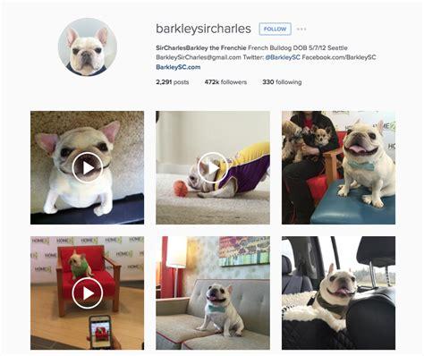 Cuentas en Instagram de mascotas más cool - Mujer de 10