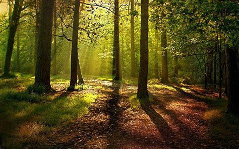 Cuento breve recomendado: El bosque de cuentos