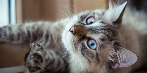 Cuidados com Gatos em Dias Quentes   Geração Pet