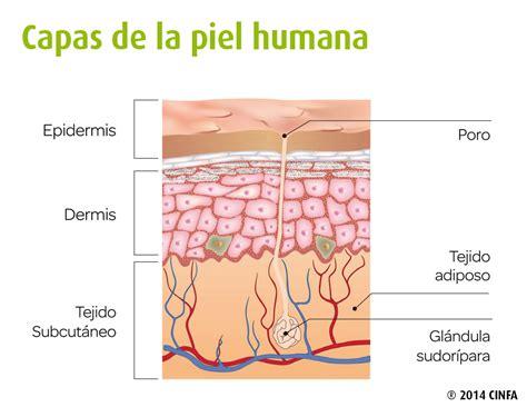 Cuidados de la piel diarios   CinfaSalud