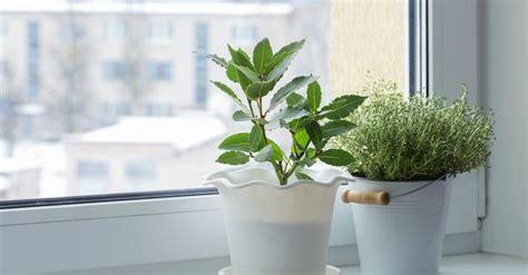 Cuidados de las plantas de interior en invierno   Blog ...