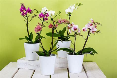 Cuidados generales de las plantas de interior - Plantas de ...
