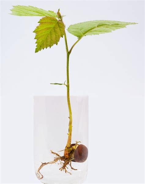 Cultivando plantas en agua