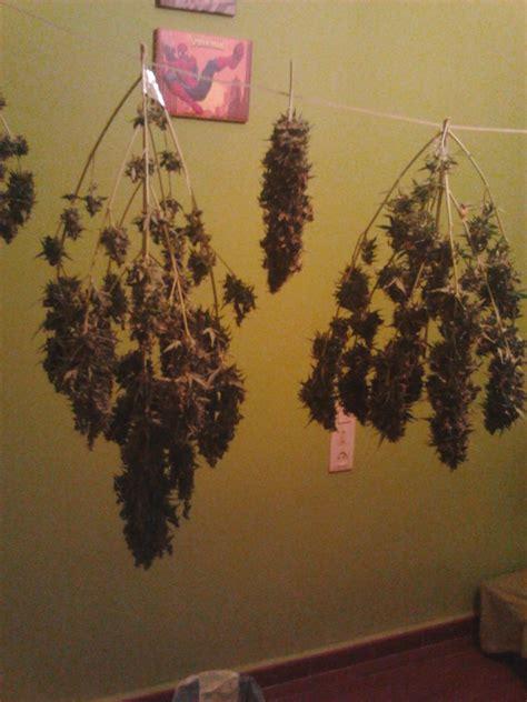 Cultivar marihuana en armario de cultivo - Blog de Grow Barato