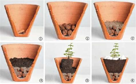 Cultivar pimentas em vasos