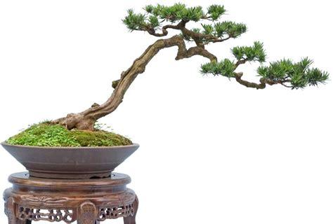 Cultura y arte milenario del bonsai   Taringa!