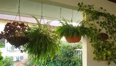 Curiosas Plantas Que No Se Deben Tener En Casa Por Ser ...