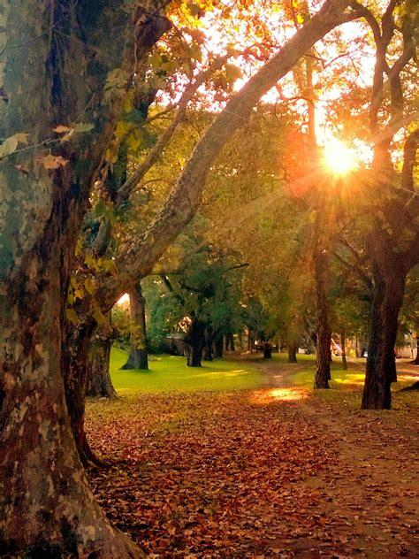Curiosidades acerca del otoño - Blog Meteoclim
