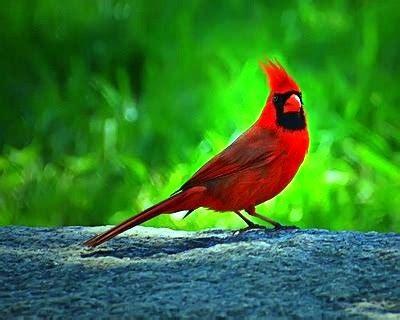 Curiosidades del Mundo: Aves exóticas del Amazonas y del ...