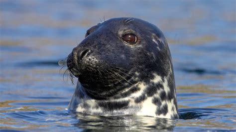 Curiosidades sobre las focas