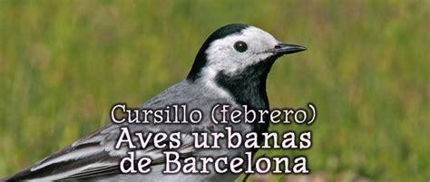 Cursillo de aves urbanas: febrero 2018   GL SEO Barcelona