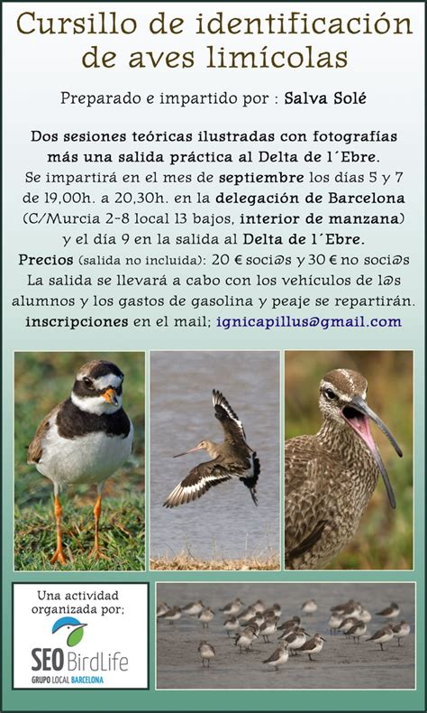 Cursillo de identificación de aves limícolas, septiembre ...