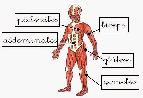 Curso Blog: Músculos del cuerpo humano. 1º.