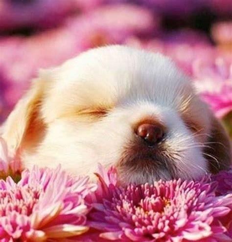cute fotos animales bonitos  7  | Perros tiernos ...