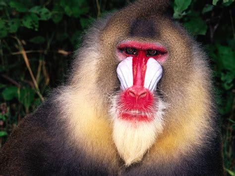 Cute Funny Animalz: Funny Baboon Monkeys