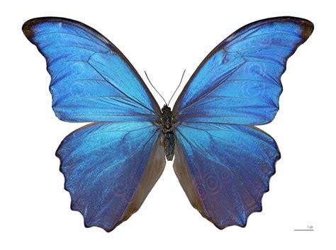 Damien Hirst's butterflies: distressing but weirdly ...