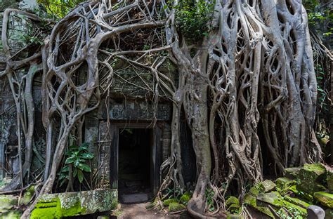 Datei:Ta Phrom, Angkor, Camboya, 2013 08 16, DD 09.JPG ...