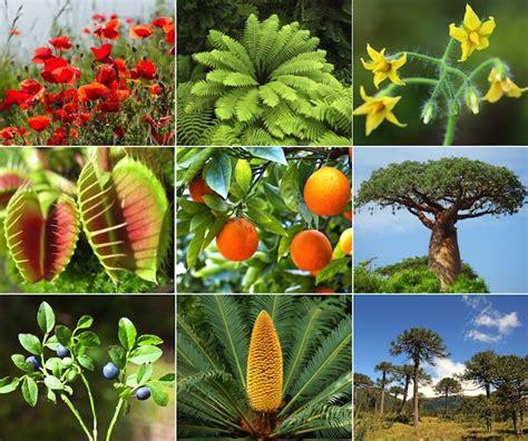 Datoonz.com = Tipos De Plantas Terrestres ~ Várias idéias ...
