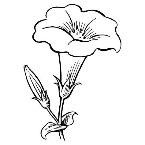De Flores Para Pintar Modelos Plantillas Mariposas Ideas ...