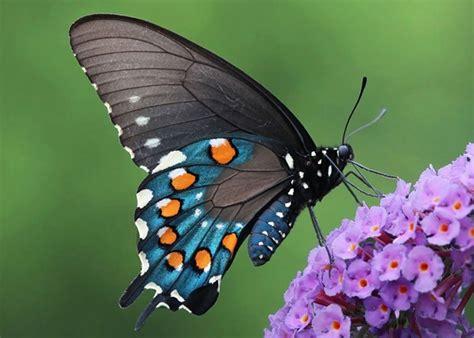 De orugas a mariposas: hermosas transformaciones de la ...