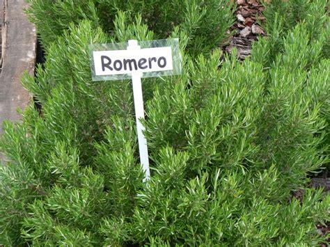 Dean Romero toma infusiones de Romero
