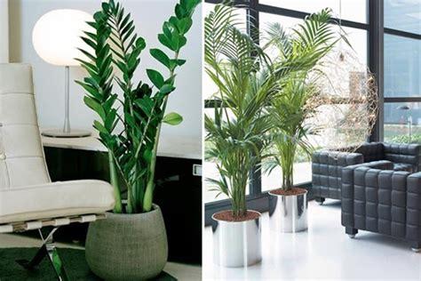 Decoração com plantas para pequenos espaços | mudominhacasa