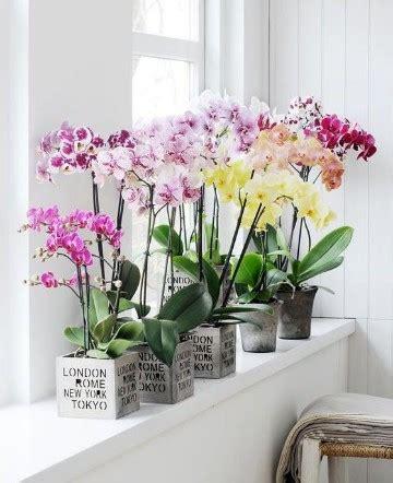Decoracion con plantas para interiores feng shui | Como ...
