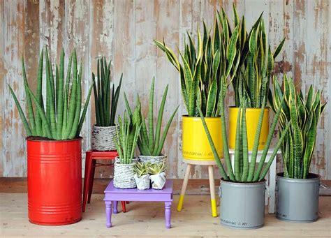 Decoración de interiores con plantas naturales y sus ...