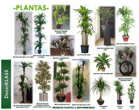 -Decoración de interiores- | plantas naturales y artificiales