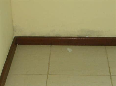 Decoracion Dormitorios » humedad en paredes solucion