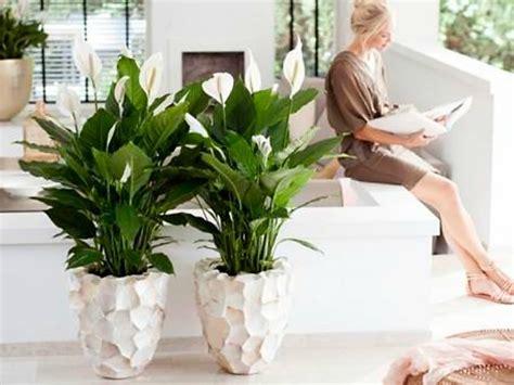 Decoración Fácil: 10 Plantas que purifican el ambiente ...