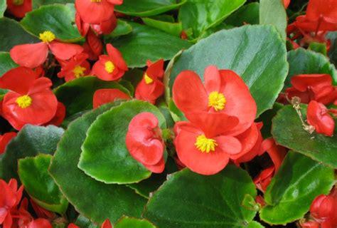 Decoración Fácil: Las mejores plantas con flor para el balcón