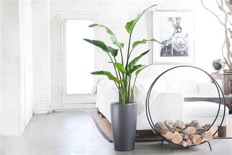 Decorar con plantas de interior la casa