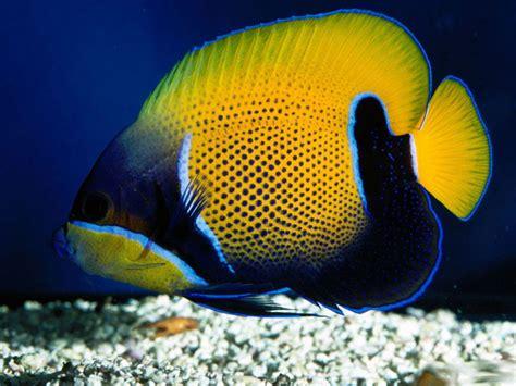 Deep Sea 3D Fish backgrounds Wallpaper   High Quality ...