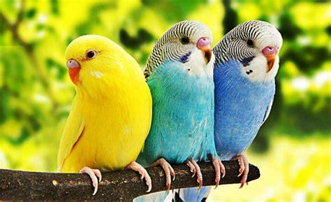 Definición de Anatomía de las Aves   Que es, Conceptos y ...