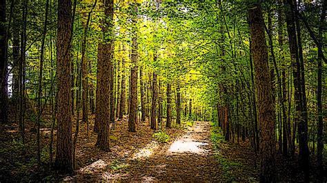 Definición de Bosque | Que es, Conceptos y Significados