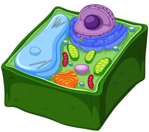 Definición de Célula vegetal » Concepto en Definición ABC