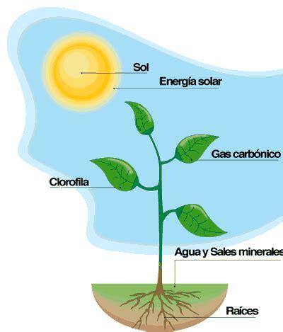 Definición de Fotosíntesis » Concepto en Definición ABC